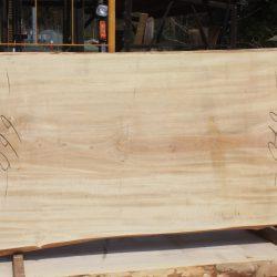 栃の木一枚板t936