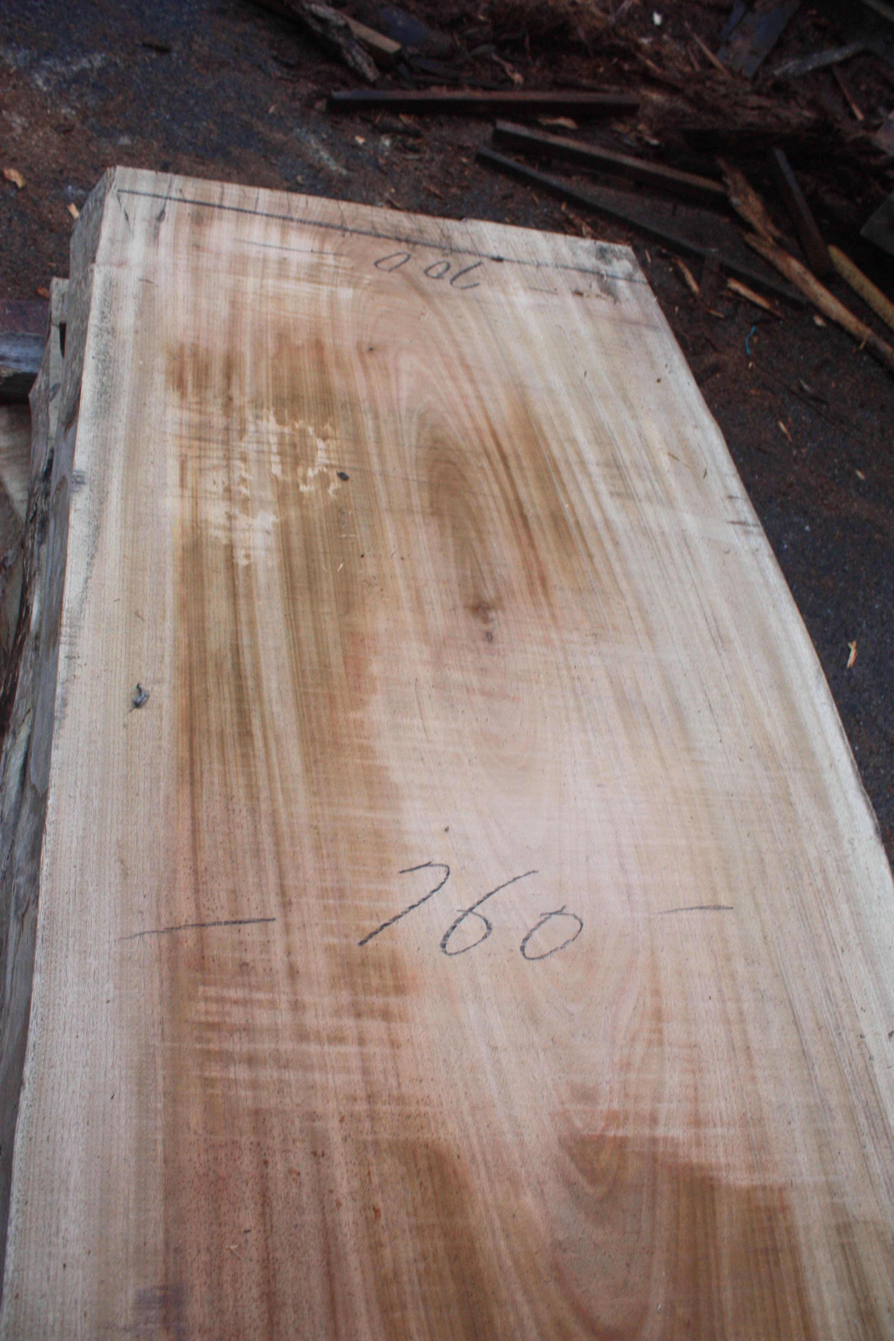 楠の木一枚板KS030