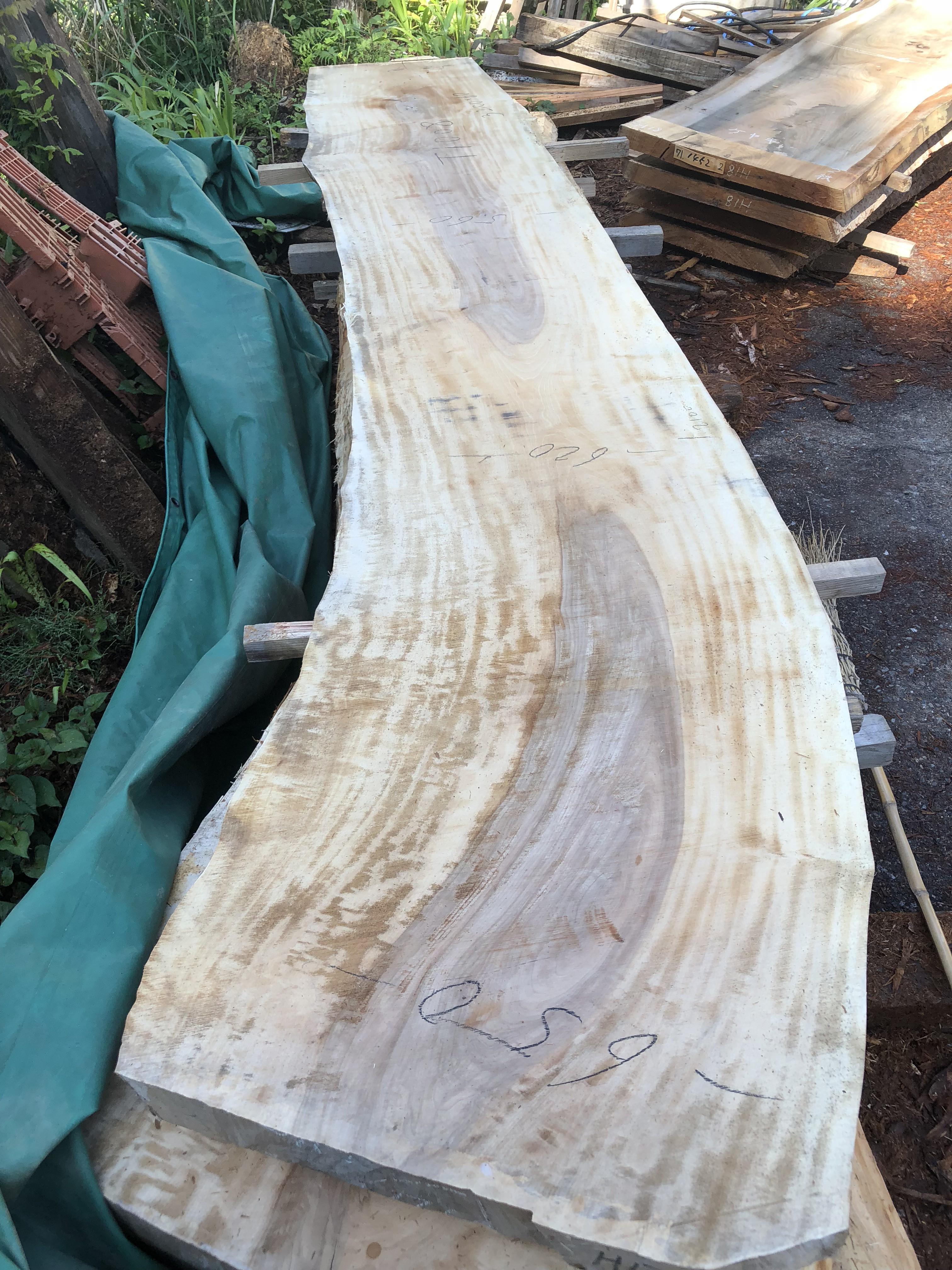 栃の木一枚板t1008